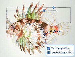 Diva Foodies _ Grilling_lionfish